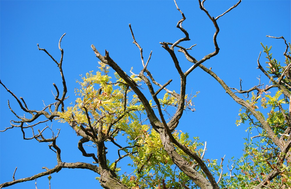 Signs That Your Tree Is Dying Or Dead