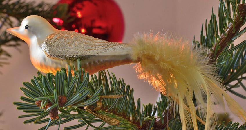 christmas tree wildlife