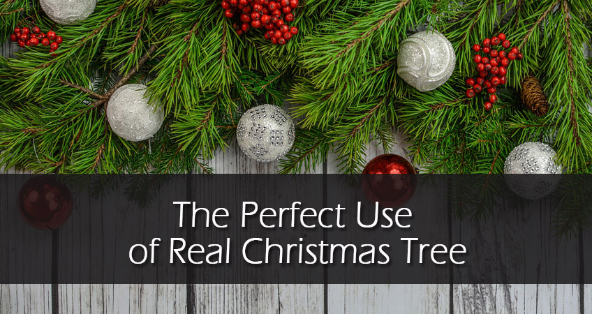 What to Do with Your Real Xmas Tree after Christmas