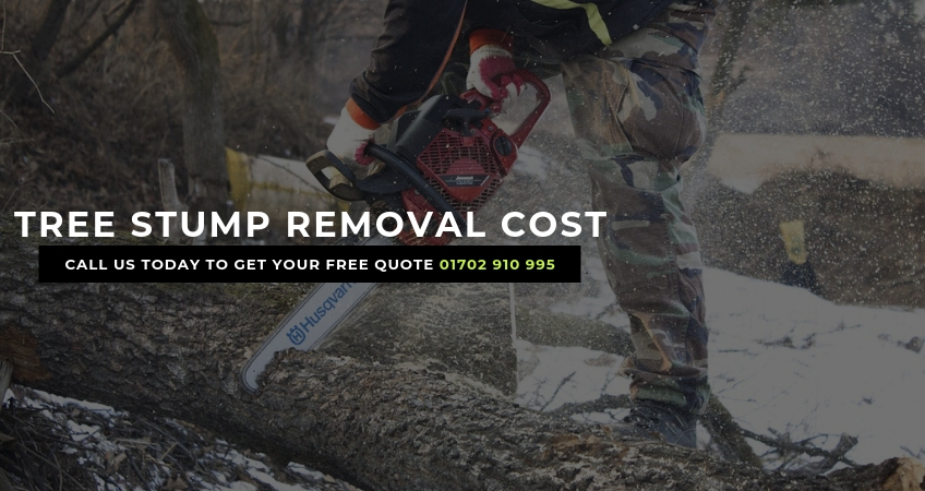 How Much To Remove a Tree Stump