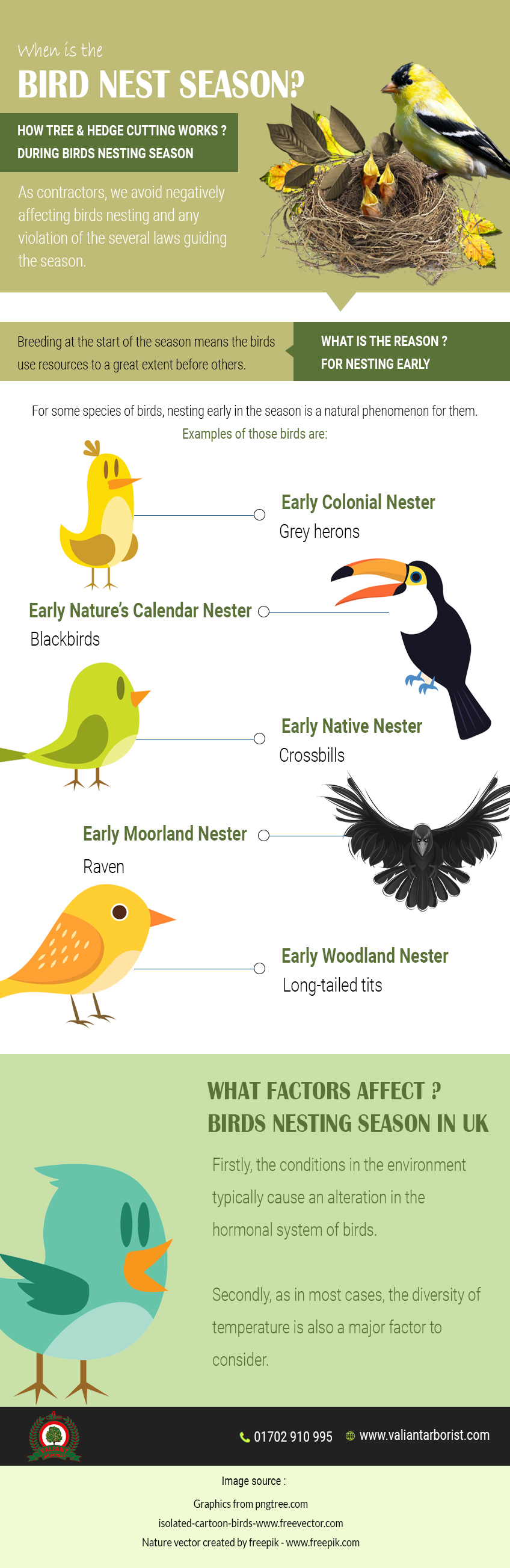 nesting-birds-season infographic