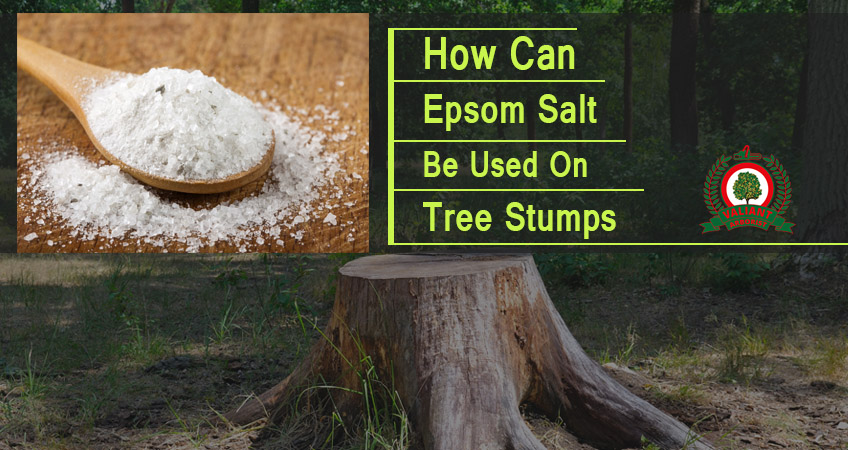 How Can Epsom Salt Be Used On Tree Stumps