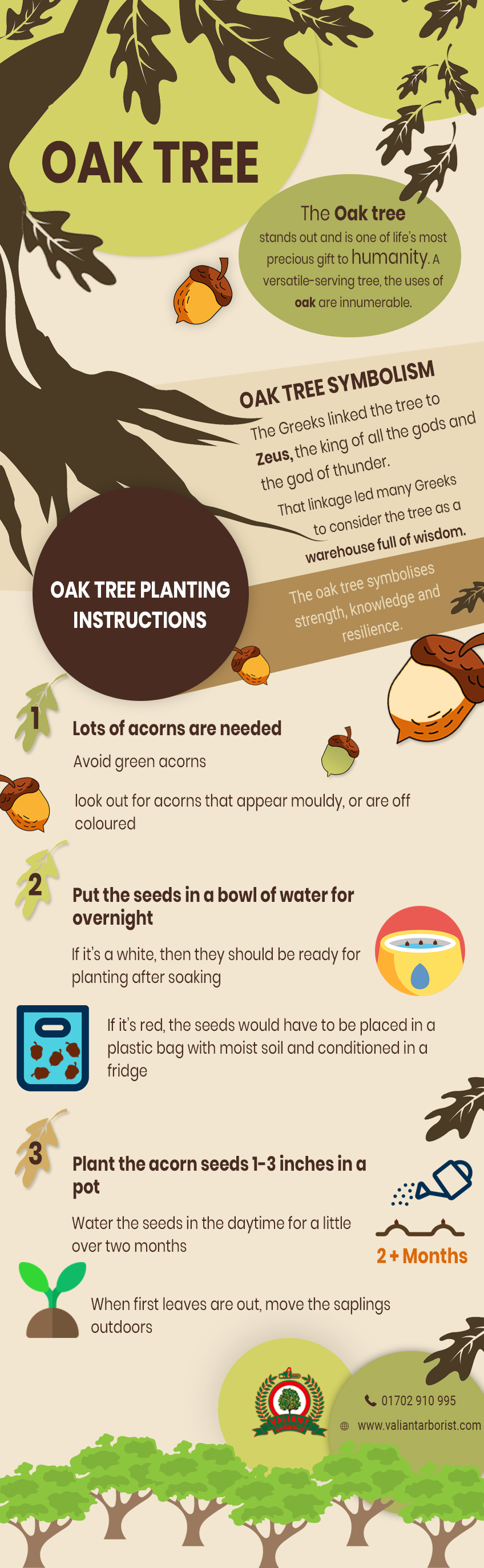 oak tree infographic