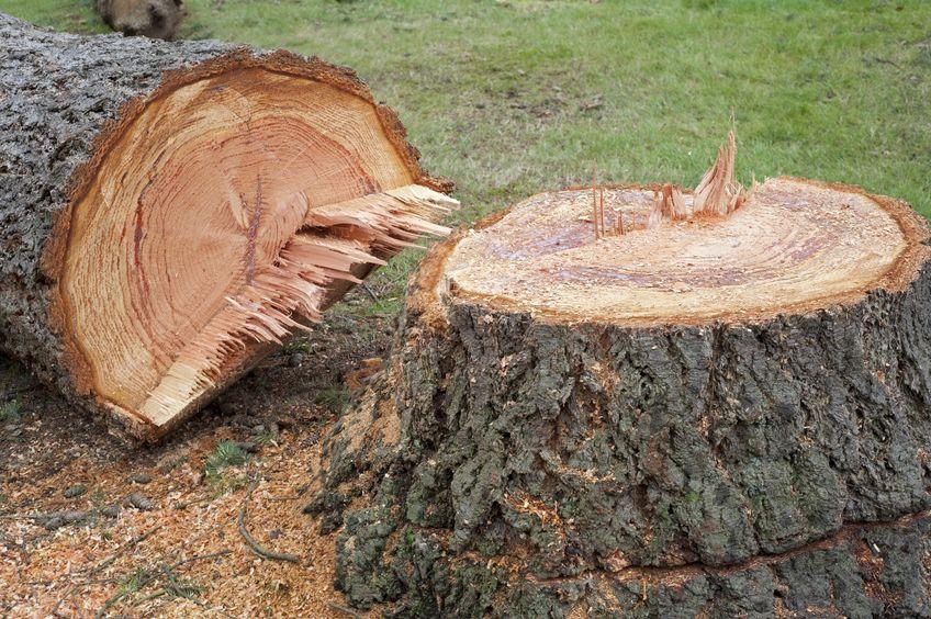 4 Easy Ways to Kill a Tree Stump Naturally & Unnaturally