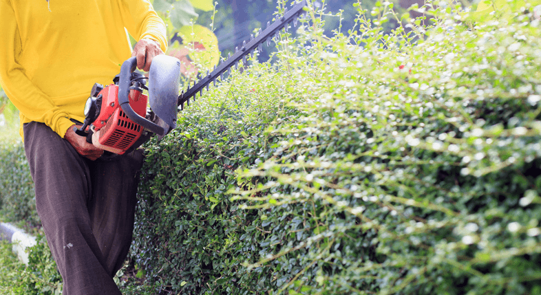 Hedge Cutting Southend